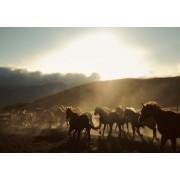 Kolla Print Horses (fler stl) (Storlek: 100x70 cm, Vit marginal: 10 cm)