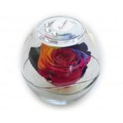 ROSABELLA® Rosa Stabilizzata Rainbow Con Strass - Ros-Stab-Glo-Rbw