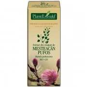 PlantExtract Extract din muguri de mesteacan pufos 50 ml