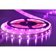 MLR-2835-60 II pink 5m 12V 60 LED/1m IP20 Mitea