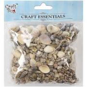 Sea Shells - Assorted