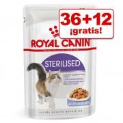 Royal Canin sobres 48 x 85 g en oferta: 36 + 12 ¡gratis! - Kitten Instinctive en salsa