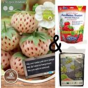 Teeltpakket Aardbei White Pineberry
