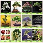 Bonsai Suitable Seeds : Bonsai Suitable Plant Seeds For Home Garden Combo Water Jasmine Thuja Orientalis Albizia Lebbeck Eucalyptus Bamboo Gulmohar Jacaranda Albizia Saman Apple Garden Seeds Pack By Creativefarmer
