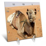 3dRose DC 164767_ 1Sonriendo Camello descansando en Campamento de beduinos en Omán Foto por Rhonda Albom Reloj de computadora, 6por 15.2cm