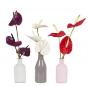 Boeket Anthurium Paars/Wit/Rood + Combinatie 3 vaasjes