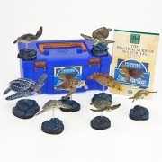 Karorata Co. Colorata Sea Turtles Real Figure Book