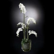 Aranjament floral PLANT NEW PHALENOPSIS, 135cm