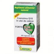 HOFIGAL COENZIMA Q 10 IN ULEI DE CATINA FORTE PLUS 60mg *40 capsule moi