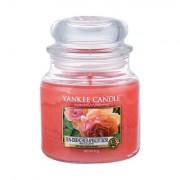 Yankee Candle Sun-Drenched Apricot Rose vonná svíčka 411 g