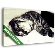 Alvó cirmos cica (40x25 cm, Vászonkép )