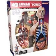 4D Vision Deluxe Human Anatomy Torso Model