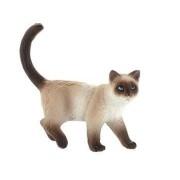 Pisica domestica Kimmy