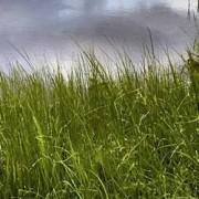 "Dell LED monitor Dell P2418D, 60.5 cm (23.8 ""),2560 x 1440 px 5 ms, IPS LED DisplayPort, HDMI™, USB 3.0"