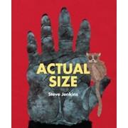 Actual Size, Paperback/Steve Jenkins