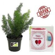 ES ASPARGUS GREEN REGULAR PLANT With Gift Anniversary Gift Mug