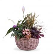 Centro de Plantas Variado - Flores a Domicilio