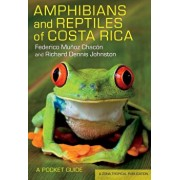 Amphibians and Reptiles of Costa Rica: A Pocket Guide, Paperback/Federico Munoz Chacon