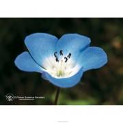 NATUR Srl Baby Blue Eyes Ess 7,4ml Calf (900901974)
