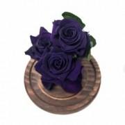 3 Trandafiri Criogenati Mov in cupola de sticla Queen Flowers