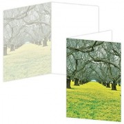 ECOeverywhere Golden Orchard Boxed Card Set 12 Cards and Envelopes 4 x 6-Inches Multicolored (bc12122)