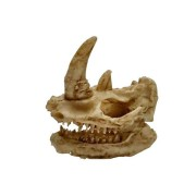 Yani Aquarium Decoration Exotic Environments Skull Aquarium Ornament Fish Tank Decor Small Size