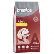 Briantos Adult Pollo & Riso - 14 kg