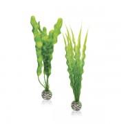 biOrb střední rostlina set zelená
