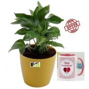 ES REJOICE ROUND MONEY PLANT LIVE NATURAL With Gift Anniversary Gift Mug