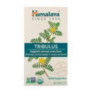 Himalaya Herbals Tribulus Himalaia 60 cápsulas