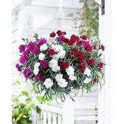Flower Seeds : Carnations That Express Love Seeds Winter Flowers Seasonal Flowering Plants (13 Packets) Garden Plant Seeds By Creative Farmer