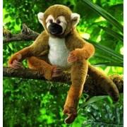 Monkey Squirrel