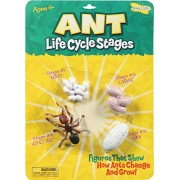 * ANT LIFE CYCLE STAGES
