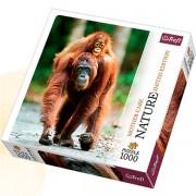 Trefl Puzzle Slagalica Orangutan Nature Edition 1000 kom (10514)