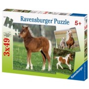 Puzzle ponei, 3x49 piese Ravensburger