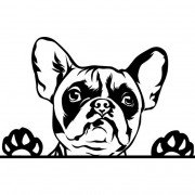 Francia bulldog (1) autómatrica