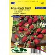 Aardbei zaden (bos) Baron Solemacher