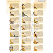 Ptaki w mieście - plansza