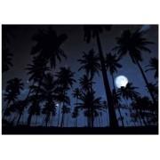 JP London MD4A170 10.5-Feet Wide by 8.5-Feet High Starry Summer Palm Calm Night Moonlight Removable Full Wall Mural