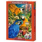 Castorland Pussel Amazon 1000 Bitar